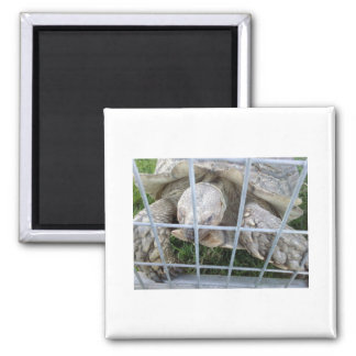 Giant Turtle 2 Inch Square Magnet