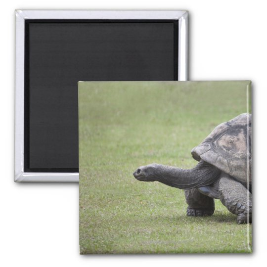 Giant turtle in grass magnet