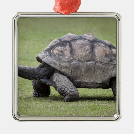 Giant turtle in grass metal ornament