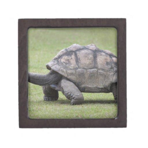 Giant turtle in grass premium keepsake box
