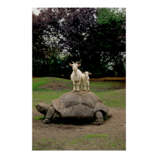 Giant turtle standing on it two goats, poster