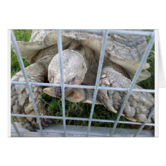 Giant Turtle Stationery Note Card