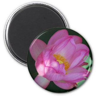Giant waterlily 2 inch round magnet