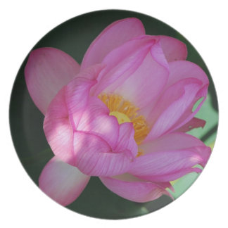 Giant Waterlily Dinner Plate