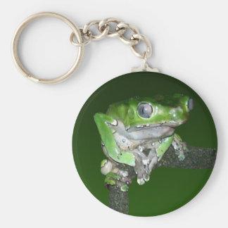 Giant Waxy Monkey Frog Key Chain