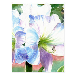 Giant White Flower with Purple and Blue Highlights Postcard