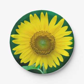 Giant Yellow Sunflower in Summer Garden Paper Plate