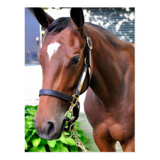 Giant's Causeway's Filly Postcard