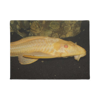 Gibbiceps de Glyptoperichthys Felpudo