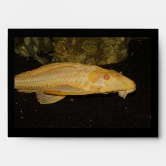 Gibbiceps de Glyptoperichthys Sobres