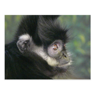 gibbon 2 postcard