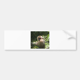 Gibbon Monkey Car Bumper Sticker
