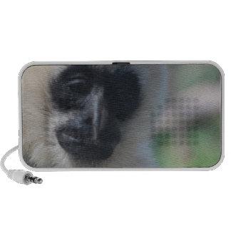 Gibbon Portable Speakers