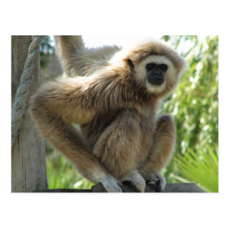 Gibbon With one hand on Rope and One On Board Postcard