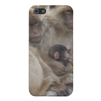 Gibraltar Apes - iPhone4 Case iPhone 5 Cover