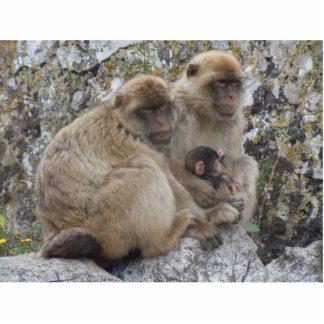 Gibraltar Apes - Photo Sculpture