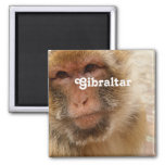Gibraltar Barbary Macaques 2 Inch Square Magnet
