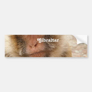 Gibraltar Barbary Macaques Bumper Stickers