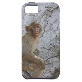 Gibraltar Monkey iPhone 5 Case-Mate