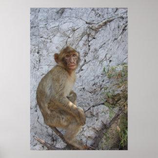 Gibraltar Monkey poster