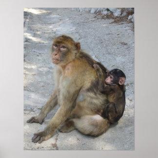 Gibraltar Monkeys poster