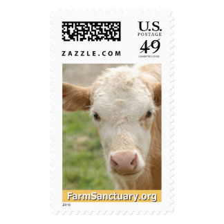 Gidget the Calf Stamp