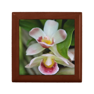 Gift Box - Fan Shaped Orchid