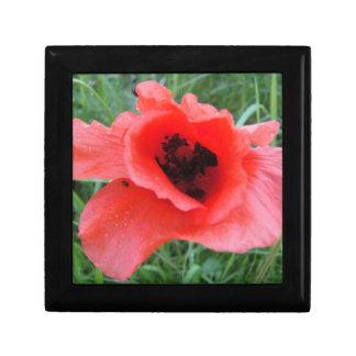 Gift box poppy flower cup