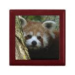 Gift box - red panda
