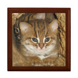 Gift box - rusty spotted cat