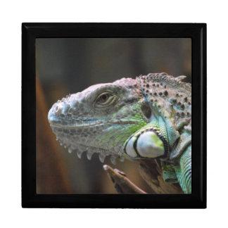 Gift Box with head of colourful Iguana lizard
