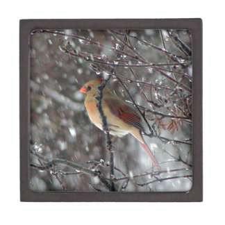 gift box with photo of female cardinal