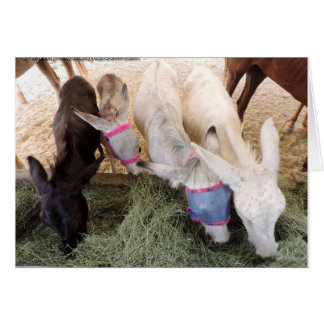 Gift certificate - one bale of hay greeting card