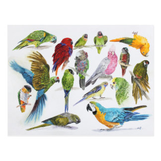 Gift for Parrot lovers everywhere Postcard
