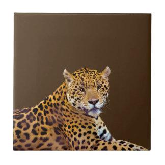 #Gift grande manchado del Gato-amante de Jaguar Azulejo Cuadrado Pequeño