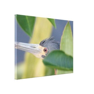 Gift Nature Lovers/Birdwatchers: Tricolored Heron Canvas Print