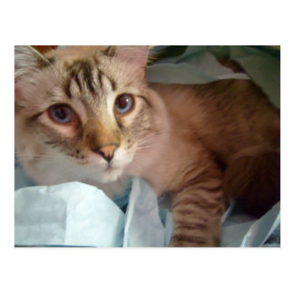 giftbag sweetie cat postcard