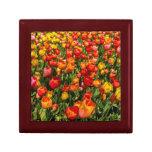 Giftbox del tulipán