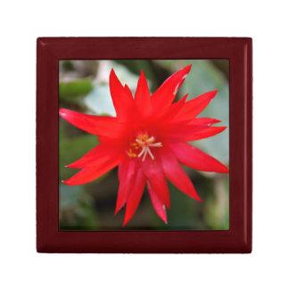 Giftbox - Easter Cactus Gift Box