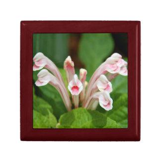 Giftbox - Pink Skullcap Gift Box