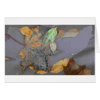 'Gifts After Rain' Notecard