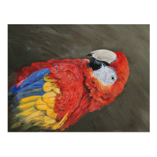 Gifts for the Parrot lover. Scarlet Macaw Postcard