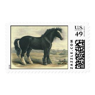 Gigante de Lincolnshire del condado del negro del Sello Postal