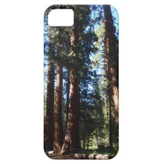 Gigante Forrest de la secoya iPhone 5 Carcasa
