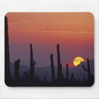 Gigantea del Carnegiea del cactus del Saguaro), pu Mouse Pads