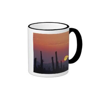 Gigantea del Carnegiea del cactus del Saguaro), pu Tazas De Café