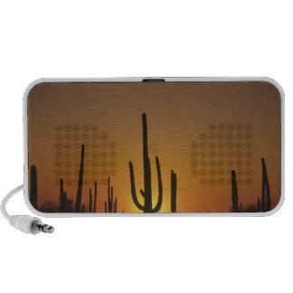Giganteus gigante del cirio del cactus del saguaro sistema altavoz