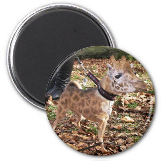 Gihuahua 2 Inch Round Magnet