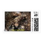 Gila Monster Stamps