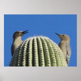Gila Woodpecker Couple Poster